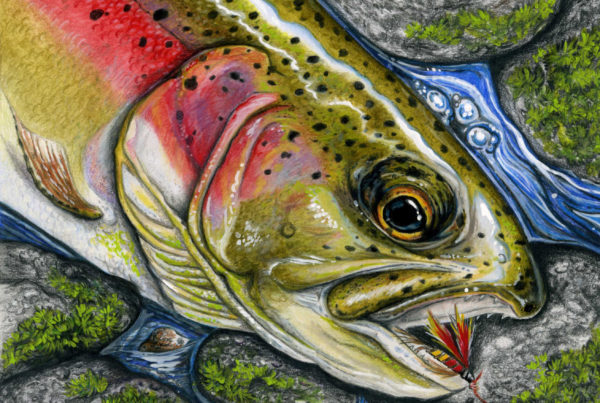 3rd place entry into the Minnesota Trout Stamp Contest